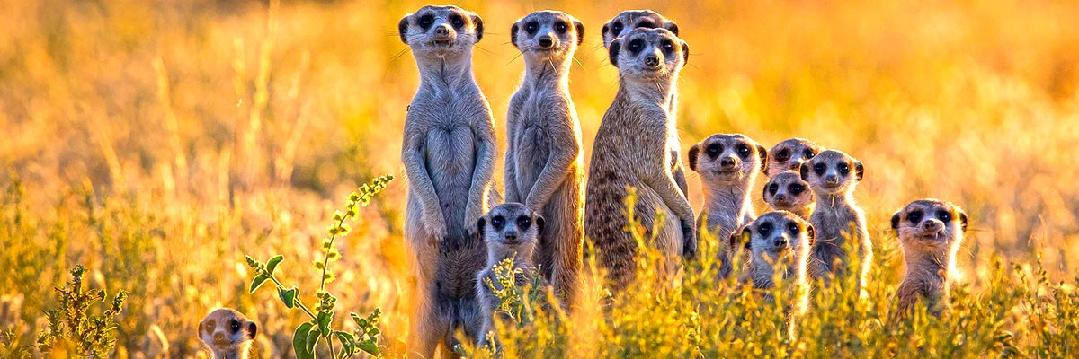 Africa-Albida-Tourism-Top-01.jpg