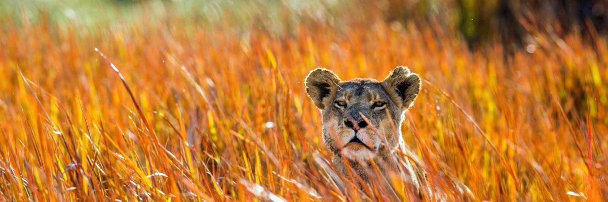 Africa-Albida-Tourism-Top-03.jpg