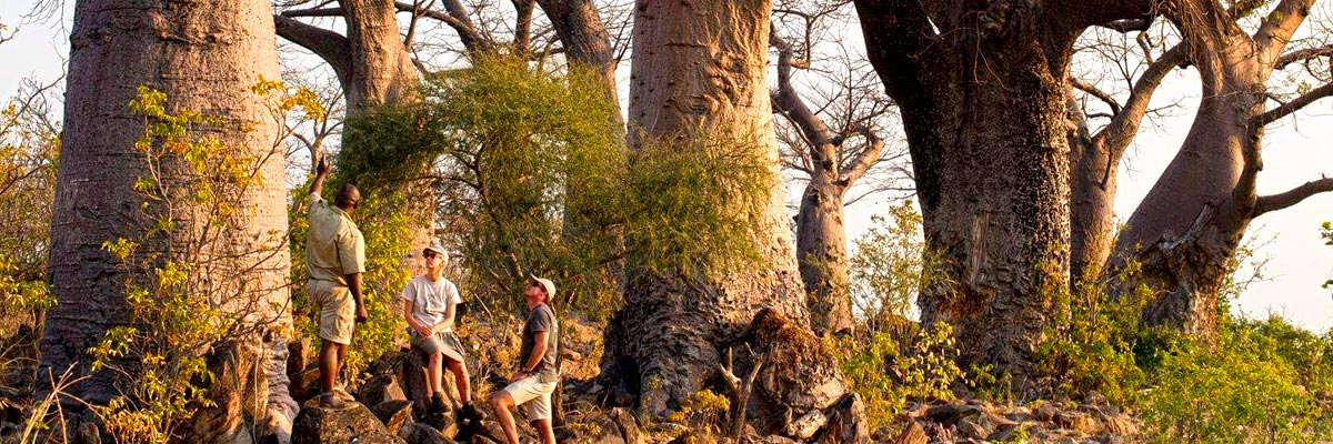 andBeyond-Botswana-Safaris-Tours-003.jpg