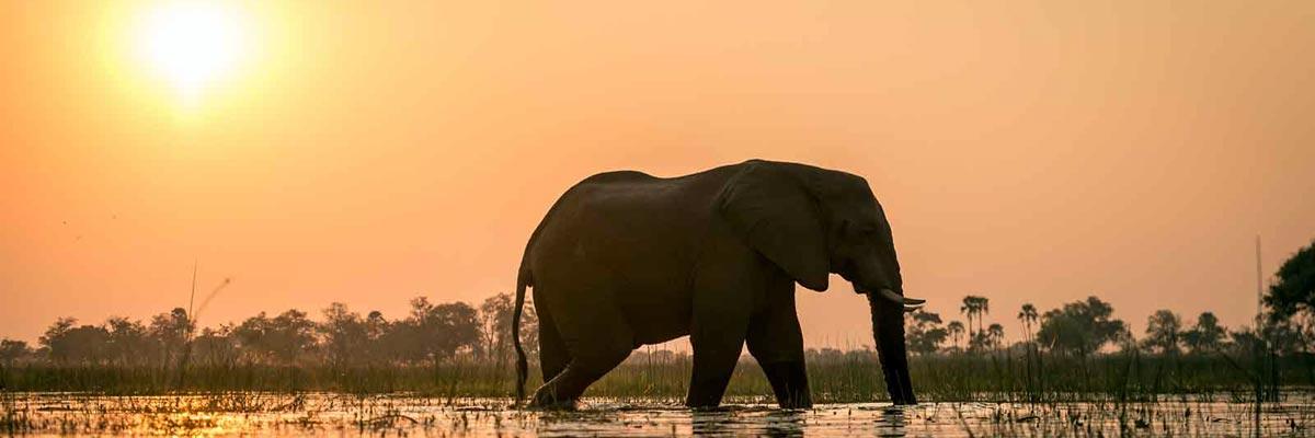 john-chase-safaris-001.jpg
