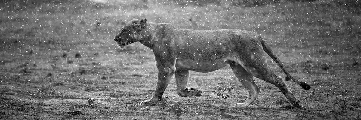 john-chase-safaris-006.jpg