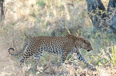 Chitabe_Wildlife_MM_2011_27.jpg