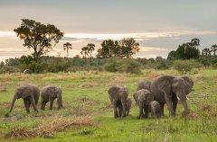 Chitabe_-_Elephants_2.jpg
