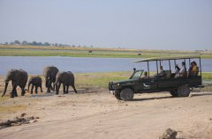 Chobe_under_canvas_gamedrive3.jpg