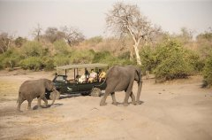 Chobe_under_canvas_gamedrive5.jpg