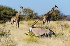 Kalahari_2012-06-141.jpg