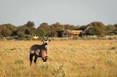 Kalahari_2015-03-6.jpg