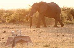 a-botswana-safari-at-andbeyond-savute-under-canvas-20.jpg.950x0.jpg