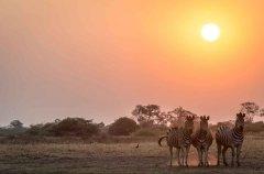 1-tuskers-bush-camp-wildlife-zebra-em.jpg