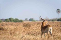 2-tuskers-bush-camp-wildlife-lechwe-em.jpg
