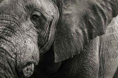 5-tuskers-bush-camp-wildlife-elephant-em.jpg