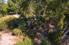 xobega-island-camp-elephant-in-camp.jpg