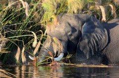 xobega_island_elephant_low_res.jpg