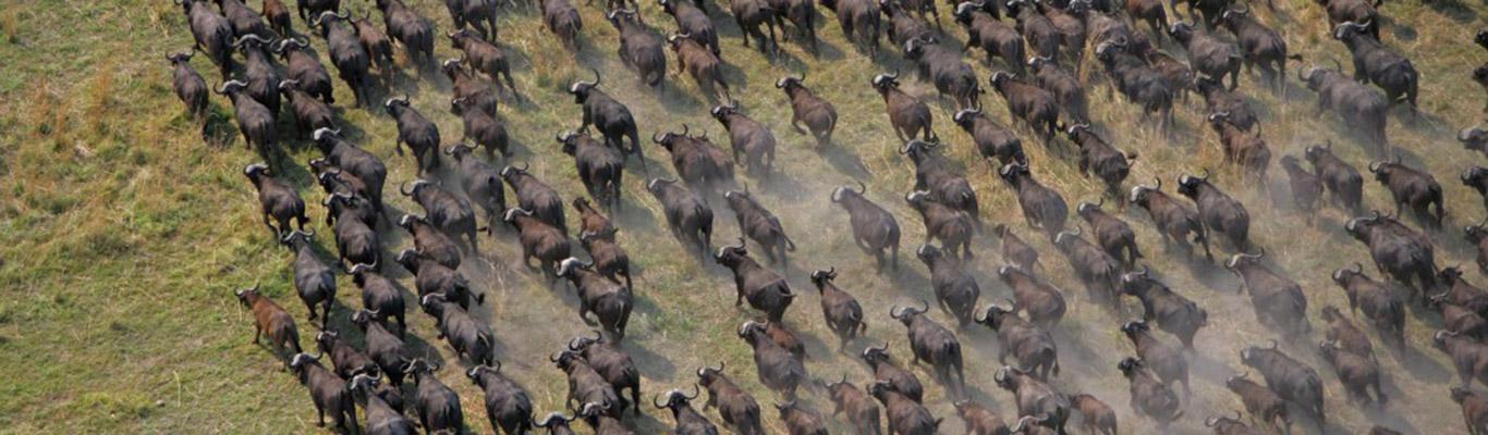 wildlife41-1024x682.jpg