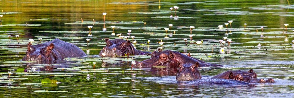 Botswana-Summer-003.jpg