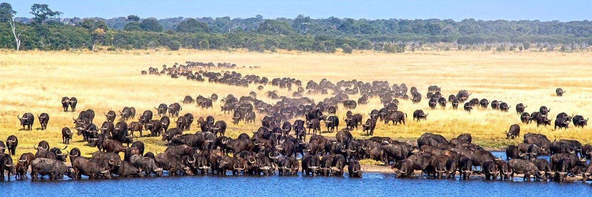 Wilderness-Safaris-004.jpg