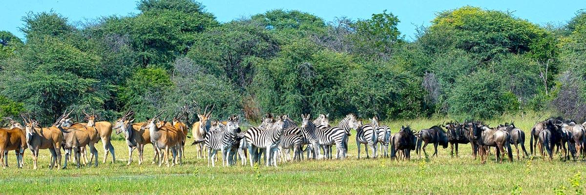 Wilderness-Safaris-006.jpg