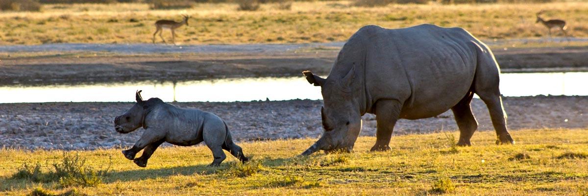 Africa-Albida-Tourism-001.jpg