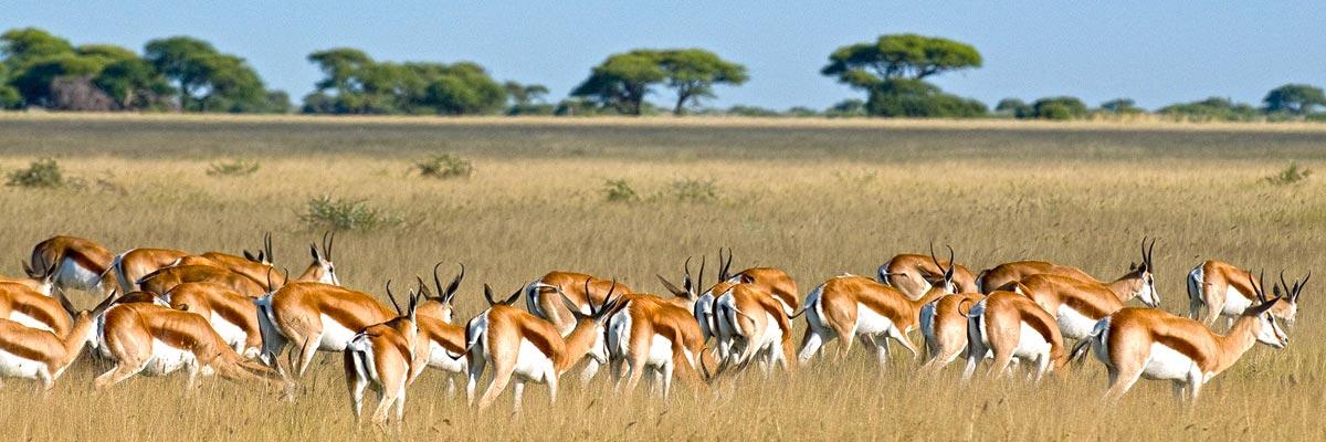 Africa-Albida-Tourism-007.jpg