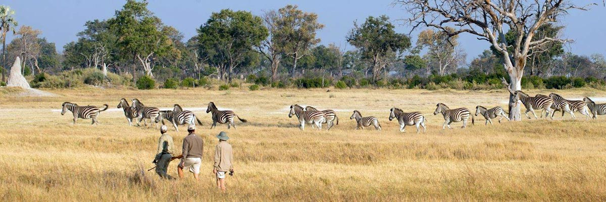 andBeyond-Botswana-Safaris-Tours-004.jpg