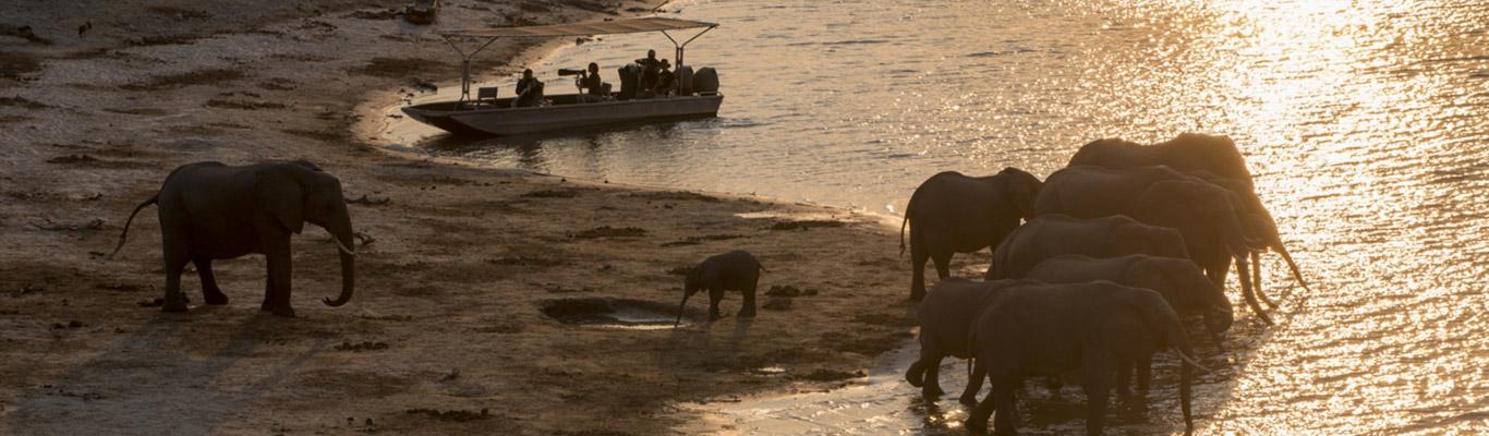 Expeditions_pangolin_photoboat_075.jpg