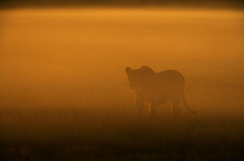 _Copyright_Beverly_Joubert_Duba_Wildlife_Botswana_4010.jpg