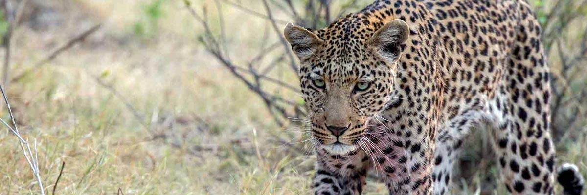 john-chase-safaris-002.jpg