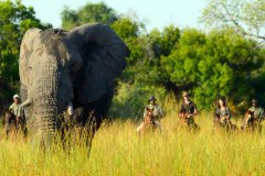 African-Horseback-Safaris-016.jpg