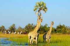 African-Horseback-Safaris-017.jpg