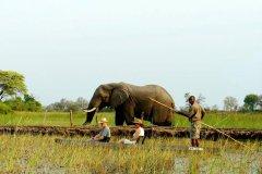 African-Horseback-Safaris-023.jpg