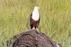 bird-watching-chobe-princess_1_tmp1771535517.jpg