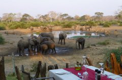 18-EVL-elephant-at-dusk.jpg