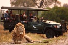wildlife-11.jpg.950x0.jpg
