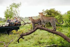 trails-of-botswana-051.jpg
