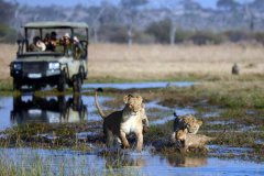 trails-of-botswana-052.jpg