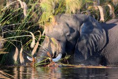 trails-of-botswana-053.jpg