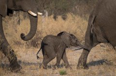 4-tuskers-bush-camp-wildlife-baby-elephant-em.jpg