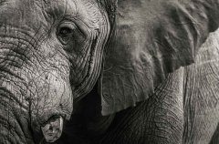 5-tuskers-bush-camp-wildlife-elephant-em.jpg