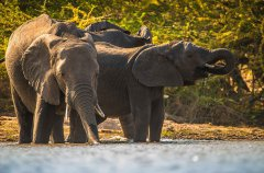 7-tuskers-bush-camp-wildlife-russ.jpg