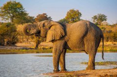 8-tuskers-bush-camp-wildlife-shannon.jpg