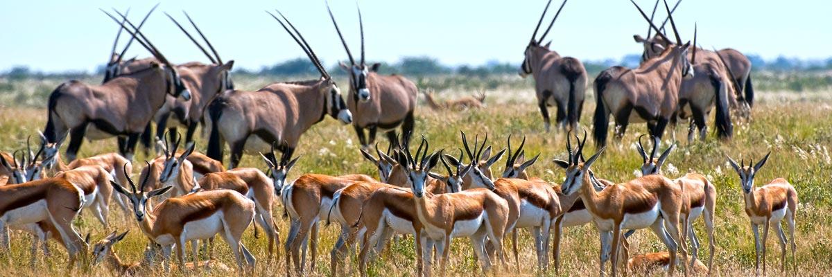 Botswana-Summer-001.jpg