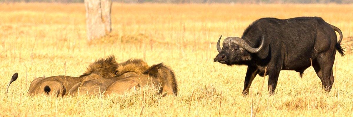 Botswana-Summer-004.jpg