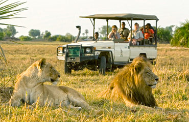 Chobe and Madikwe Safari